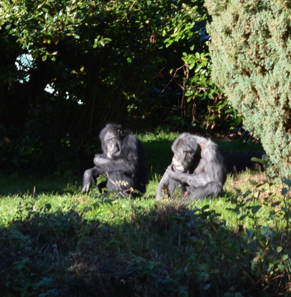 Tips for Visiting Chester Zoo from Newcastle - Chimp family