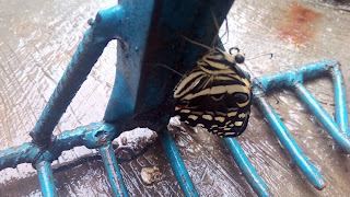 Rake Up The Butterfly In You