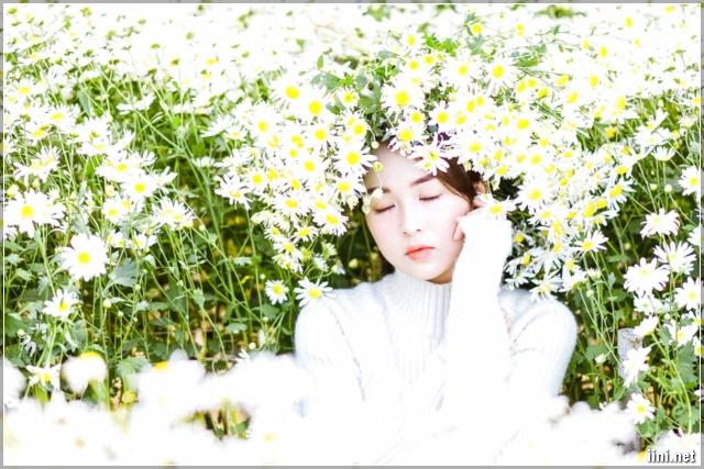 ảnh cô gái xinh đẹp trong vườn cúc họa mi
