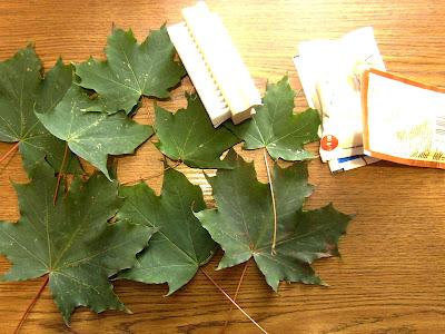 Preparowanie liści