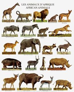 اسماء الحيوانات البريه والغابة بالانجليزى
