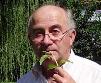 Piante che curano, piante proibite