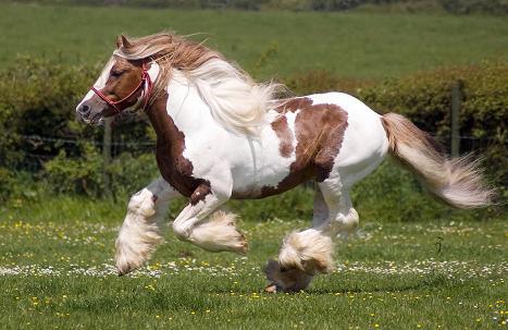 cavalo toque mp3 relincho relinchando