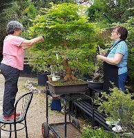 bonsai bilbao