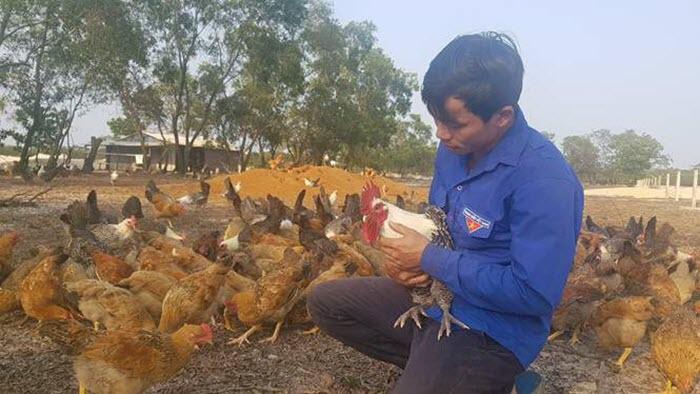 Kỹ sư công nghệ thông tin về quê nuôi... gà Ai Cập