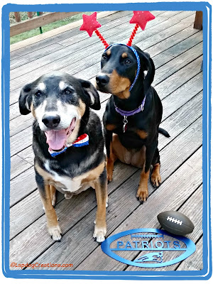 two rescued dogs patriots fans