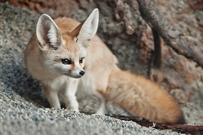 Jual Fennec suka mencuri,  Harga Fennec suka mencuri,  Toko Fennec suka mencuri,  Diskon Fennec suka mencuri,  Beli Fennec suka mencuri,  Review Fennec suka mencuri,  Promo Fennec suka mencuri,  Spesifikasi Fennec suka mencuri,  Fennec suka mencuri Murah,  Fennec suka mencuri Asli,  Fennec suka mencuri Original,  Fennec suka mencuri Jakarta,  Jenis Fennec suka mencuri,  Budidaya Fennec suka mencuri,  Peternak Fennec suka mencuri,  Cara Merawat Fennec suka mencuri,  Tips Merawat Fennec suka mencuri,  Bagaimana cara merawat Fennec suka mencuri,  Bagaimana mengobati Fennec suka mencuri,  Ciri-Ciri Hamil Fennec suka mencuri,  Kandang Fennec suka mencuri,  Ternak Fennec suka mencuri,  Makanan Fennec suka mencuri,  Fennec suka mencuri Termahal,  Adopsi Fennec suka mencuri,  Jual Cepat Fennec suka mencuri,  Fennec suka mencuri  Jakarta,  Fennec suka mencuri  Bandung,  Fennec suka mencuri  Medan,  Fennec suka mencuri  Bali,  Fennec suka mencuri  Makassar,  Fennec suka mencuri  Jambi,  Fennec suka mencuri  Pekanbaru,  Fennec suka mencuri  Palembang,  Fennec suka mencuri  Sumatera,  Fennec suka mencuri  Langsa,  Fennec suka mencuri  Lhokseumawe,  Fennec suka mencuri  Meulaboh,  Fennec suka mencuri  Sabang,  Fennec suka mencuri  Subulussalam,  Fennec suka mencuri  Denpasar,  Fennec suka mencuri  Pangkalpinang,  Fennec suka mencuri  Cilegon,  Fennec suka mencuri  Serang,  Fennec suka mencuri  Tangerang Selatan,  Fennec suka mencuri  Tangerang,  Fennec suka mencuri  Bengkulu,  Fennec suka mencuri  Gorontalo,  Fennec suka mencuri  fennec fox for sale,  Fennec suka mencuri  desert fox,  Fennec suka mencuri  fennec fox jual,  Fennec suka mencuri  fennec,  Fennec suka mencuri  fennec fox pet,  Fennec suka mencuri  fennec hare,  Fennec suka mencuri  pet fox for sale,  Fennec suka mencuri  fox for sale,  Fennec suka mencuri  fennec fox information,  Fennec suka mencuri  where can i buy a fennec fox,  Fennec suka mencuri  fennec fox adoption,  Fennec suka mencuri  baby fennec fox,  Fennec suka mencuri  buy pet fox,  Fennec suka mencuri  fennec fox price,  Fennec suka mencuri  fennec fox breeders,  Fennec suka mencuri  foxes as pets,  Fennec suka mencuri  baby fox for sale,  Fennec suka mencuri  where to get a fennec fox,  Fennec suka mencuri  fennec fox diet,  Fennec suka mencuri  pet fennec fox,  Fennec suka mencuri  the fennec fox,  Fennec suka mencuri  domestic fox,  Fennec suka mencuri  buy fennec fox,  Fennec suka mencuri  what does a fennec fox eat,  Fennec suka mencuri  domesticated fox for sale,  Fennec suka mencuri  baby fennec fox for sale,  Fennec suka mencuri  fox ears,  Fennec suka mencuri  fennec fox food,  Fennec suka mencuri  fennec fox buy,  Fennec suka mencuri  domestic fox for sale,  Fennec suka mencuri  where to buy a fennec fox,  Fennec suka mencuri  fennec fox as pet,  Fennec suka mencuri  what does the fennec fox eat,  Fennec suka mencuri  fennec fox predators,  Fennec suka mencuri  adopt a fennec fox,  Fennec suka mencuri  fennec fox pet for sale,  Fennec suka mencuri  desert fox animal,  Fennec suka mencuri  baby fennec fox sale,  Fennec suka mencuri  fox fennec,  Fennec suka mencuri  buy a pet fox,  Fennec suka mencuri  fence fox for sale,  Fennec suka mencuri  what is a fennec fox,  Fennec suka mencuri  where to buy fennec fox,  Fennec suka mencuri  fennec fox baby,  Fennec suka mencuri  where to get a pet fox,  Fennec suka mencuri  fox pet,  Fennec suka mencuri  fennec fox pup,  Fennec suka mencuri  fennec fox as a pet,  Fennec suka mencuri  pet fox names,  Fennec suka mencuri  fennec fox ears,  Fennec suka mencuri  fox with big ears,  Fennec suka mencuri  fox pet for sale,  Fennec suka mencuri  fennec fox sale,  Fennec suka mencuri  fennec fox for adoption,  Fennec suka mencuri  pet fox breeders,  Fennec suka mencuri  fennec fox enemies,  Fennec suka mencuri  where can i buy a pet fox,  Fennec suka mencuri  fennec fox behavior,  Fennec suka mencuri  fennec fox pet price,  Fennec suka mencuri  the fennec,  Fennec suka mencuri  what does fennec fox eat,  Fennec suka mencuri  fennec foxes for sale cheap,  Fennec suka mencuri  fennec fox for sale price,  Fennec suka mencuri  fennec fox endangered species,  Fennec suka mencuri  where to get fennec foxes,  Fennec suka mencuri  fennec fox endangered,  Fennec suka mencuri  adaptation of fennec fox,  Fennec suka mencuri  fennec fox animal,  Fennec suka mencuri  desert fennec fox,  Fennec suka mencuri  fennec fox care,  Fennec suka mencuri  adopt fennec fox,  Fennec suka mencuri  fennec fox cost,  Fennec suka mencuri  fennec fox fur,  Fennec suka mencuri  big ear fox,  Fennec suka mencuri  pet fennec fox for sale,  Fennec suka mencuri  pet fox food,  Fennec suka mencuri  buy domesticated fox,  Fennec suka mencuri  buy fennec fox price,  Fennec suka mencuri  sahara desert fox,  Fennec suka mencuri  fennec fox furry,  Fennec suka mencuri  smallest fox,  Fennec suka mencuri  fennec fox facts,  Fennec suka mencuri  baby fennec,  Fennec suka mencuri  small desert fox,  Fennec suka mencuri  fennec fox names,  Fennec suka mencuri  cute fennec fox,  Fennec suka mencuri  fennec fox eating,  Fennec suka mencuri  fennec for sale,  Fennec suka mencuri  fennec fox natural habitat,  Fennec suka mencuri  sahara fox,  Fennec suka mencuri  foxes for pets,  Fennec suka mencuri  baby desert fox,  Fennec suka mencuri  fennec fox reproduction,  Fennec suka mencuri  african fennec fox,  Fennec suka mencuri  fennec desert fox,  Fennec suka mencuri  small fennec fox,  Fennec suka mencuri  where might you find a fennec fox in the wild,  Fennec suka mencuri  tame baby foxes for sale,  Fennec suka mencuri  what fennec foxes eat,  Fennec suka mencuri  fennec fox cage,  Fennec suka mencuri  fennec pet,  Fennec suka mencuri  corsac fox for sale,  Fennec suka mencuri  fox ear,  Fennec suka mencuri  fox big ears,  Fennec suka mencuri  baby pet fox,  Fennec suka mencuri  a fennec fox,  Fennec suka mencuri  white fennec fox,  Fennec suka mencuri  fennec fox tail,  Fennec suka mencuri  owning a fennec fox,  Fennec suka mencuri  small fox pet,  Fennec suka mencuri  where does fennec fox live,  Fennec suka mencuri  fennec fox adaptation,  Fennec suka mencuri  domesticated fennec foxes,  Fennec suka mencuri  foxes as pets for sale,  Fennec suka mencuri  fennec fox in the desert,  Fennec suka mencuri  can you own a fennec fox,  Fennec suka mencuri  fennec fox for sale uk,  Fennec suka mencuri  desert fox ears,  Fennec suka mencuri  baby fox pet,  Fennec suka mencuri  fennec fox desert,  Fennec suka mencuri  fennec fox breeding,  Fennec suka mencuri  desert fox pet,  Fennec suka mencuri  white desert fox,  Fennec suka mencuri  fennec fox range,  Fennec suka mencuri  fennec fox cute,  Fennec suka mencuri  fennec hare pet,  Fennec suka mencuri  fox for pet sale,  Fennec suka mencuri  adaptation of desert fox,  Fennec suka mencuri  domestic fennec fox,  Fennec suka mencuri  fennec fox colors,  Fennec suka mencuri  what is fennec,  Fennec suka mencuri  newborn fennec fox,  Fennec suka mencuri  fennec fox for pet,  Fennec suka mencuri  african fox,  Fennec suka mencuri  fennec fox babies sale,  Fennec suka mencuri  fennec fox eyes,  Fennec suka mencuri  pet fennec,  Fennec suka mencuri  can i own a fennec fox,  Fennec suka mencuri  the fennec hare,  Fennec suka mencuri  fennec fox cub,  Fennec suka mencuri  buy baby fennec fox,  Fennec suka mencuri  fennec fox weight,  Fennec suka mencuri  exotic fox,  Fennec suka mencuri  fennec fox family,  Fennec suka mencuri  fox for sale pet,  Fennec suka mencuri  exotic pet fox,  Fennec suka mencuri  smallest fox in the world,  Fennec suka mencuri  fennec fox full grown,  Fennec suka mencuri  price of fennec fox,  Fennec suka mencuri  domesticated fox breeders,  Fennec suka mencuri  fence fox,  Fennec suka mencuri  fennec fox enclosure,  Fennec suka mencuri  pet fox price,  Fennec suka mencuri  fox fennec for sale,  Fennec suka mencuri  desert fox diet,  Fennec suka mencuri  pet fox care,  Fennec suka mencuri  sandy wild fennec fox,  Fennec suka mencuri  fennec fox species,  Fennec suka mencuri  fox in the desert,  Fennec suka mencuri  fennec baby,  Fennec suka mencuri  sand fox pet,  Fennec suka mencuri  fennec fox pet cost,  Fennec suka mencuri  fennec rabbit,  Fennec suka mencuri  what do fennec foxes eat,  Fennec suka mencuri  can fennec foxes be pets,  Fennec suka mencuri  facts about fennec foxes,  Fennec suka mencuri  fennic fox,  Fennec suka mencuri  fennec fox features,  Fennec suka mencuri  fennec fox burrow,  Fennec suka mencuri  fennec fox facts for kids,  Fennec suka mencuri  pet fennec fox price,  Fennec suka mencuri  small fox,  Fennec suka mencuri  fenec fox,  Fennec suka mencuri  tame fox price,  Fennec suka mencuri  fennec fox live,  Fennec suka mencuri  fenix fox,  Fennec suka mencuri  fennec fox pet care,  Fennec suka mencuri  the domestic fox,  Fennec suka mencuri  fennec fox playing,  Fennec suka mencuri  furry fennec fox,  Fennec suka mencuri  corsac fox pet,  Fennec suka mencuri  vulpes zerda,  Fennec suka mencuri  fennec fox pictures,  Fennec suka mencuri  fox pet price,  Fennec suka mencuri  fennec fox house pet,  Fennec suka mencuri  animals with big ears,  Fennec suka mencuri  fennec fox adaptations,  Fennec suka mencuri  where do fennec foxes live,  Fennec suka mencuri  is a fennec fox a good pet,  Fennec suka mencuri  fenic fox,  Fennec suka mencuri  how much is a fennec fox,  Fennec suka mencuri  fennec fox nocturnal,  Fennec suka mencuri  fox africa,  Fennec suka mencuri  fennec furry,  Fennec suka mencuri  fennec fox teeth,  Fennec suka mencuri  fox genus,  Fennec suka mencuri  fennec fox ราคา,  Fennec suka mencuri  desert fox for sale,  Fennec suka mencuri  are fennec foxes endangered,  Fennec suka mencuri  fennec fox behaviour,  Fennec suka mencuri  fennec animal,  Fennec suka mencuri  fennex fox,  Fennec suka mencuri  fox house pet,  Fennec suka mencuri  fennec fox running,  Fennec suka mencuri  fennec fox anatomy,  Fennec suka mencuri  fennel fox,  Fennec suka mencuri  desert fox adaptation,  Fennec suka mencuri  how much are fennec foxes,  Fennec suka mencuri  fennecs as pets,  Fennec suka mencuri  desert sand fox,  Fennec suka mencuri  big eared fox,  Fennec suka mencuri  fennec fox skeleton,  Fennec suka mencuri  fennec fox australia,  Fennec suka mencuri  cute baby fennec fox,  Fennec suka mencuri  pictures of fennec foxes,  Fennec suka mencuri  fennix fox,  Fennec suka mencuri  desert fox adaptations,  Fennec suka mencuri  african sand fox,  Fennec suka mencuri  fennce fox,  Fennec suka mencuri  fennac fox,  Fennec suka mencuri  exotic pets fennec fox,  Fennec suka mencuri  fennec fox face,  Fennec suka mencuri  fennec fox video,  Fennec suka mencuri  fennec puppy,  Fennec suka mencuri  why are fennec foxes endangered,  Fennec suka mencuri  desert fox facts,  Fennec suka mencuri  fennec foc,  Fennec suka mencuri  fox sahara,  Fennec suka mencuri  pet fox breeds,  Fennec suka mencuri  fennecfox,  Fennec suka mencuri  fennecus zerda,  Fennec suka mencuri  fennec fox for sale south africa,  Fennec suka mencuri  the smallest fox,  Fennec suka mencuri  fennec fox pet uk,  Fennec suka mencuri  domesticated pet fox,  Fennec suka mencuri  fennick fox,  Fennec suka mencuri  fennec fox defense,  Fennec suka mencuri  cute pet fox,  Fennec suka mencuri  desert fox as pet,  Fennec suka mencuri  fox animal for sale,  Fennec suka mencuri  is a fennec fox a carnivore,  Fennec suka mencuri  information about fennec fox,  Fennec suka mencuri  fennet fox,  Fennec suka mencuri  buy a tame fox,  Fennec suka mencuri  fennek fox,  Fennec suka mencuri  long eared fox,  Fennec suka mencuri  fennec fox lifespan,  Fennec suka mencuri  fennec fox kit,  Fennec suka mencuri  fennec fox legal states,  Fennec suka mencuri  how much do fennec foxes cost,  Fennec suka mencuri  fennec fox interesting facts,  Fennec suka mencuri  little fox dog,  Fennec suka mencuri  photo fennec,  Fennec suka mencuri  how to draw a fennec fox,  Fennec suka mencuri  fennec fox photos,  Fennec suka mencuri  fennec fox fun facts,  Fennec suka mencuri  fox adaptations,  Fennec suka mencuri  adult fennec fox,  Fennec suka mencuri  fennec fox uk,  Fennec suka mencuri  phoenix fox animal,  Fennec suka mencuri  fennec fox national geographic,  Fennec suka mencuri  fennec fox for sale arizona,  Fennec suka mencuri  interesting facts about fennec foxes,  Fennec suka mencuri  fennec fox size,  Fennec suka mencuri  fenne fox,  Fennec suka mencuri  fennec fox for sale canada,  Fennec suka mencuri  foxes as house pets,  Fennec suka mencuri  fenneck fox,  Fennec suka mencuri  feenec fox,  Fennec suka mencuri  fennec fox pet australia,  Fennec suka mencuri  happy fennec fox,  Fennec suka mencuri  are fennec foxes good pets,  Fennec suka mencuri  egyptian fox,  Fennec suka mencuri  fennec fox sound,  Fennec suka mencuri  animal fennec,  Fennec suka mencuri  do fennec foxes make good pets,  Fennec suka mencuri  firefox fennec,  Fennec suka mencuri  white pet fox,  Fennec suka mencuri  fennik fox,  Fennec suka mencuri  fennec fox for sale in uk,  Fennec suka mencuri  fennec fo,  Fennec suka mencuri  fennec foz,  Fennec suka mencuri  fennec fox kits sale,  Fennec suka mencuri  fennec fox description,  Fennec suka mencuri  how many fennec foxes are left in the world,  Fennec suka mencuri  do foxes live in burrows,  Fennec suka mencuri  fennec fox scientific name,  Fennec suka mencuri  how long do fennec foxes live,  Fennec suka mencuri  national geographic fennec fox,  Fennec suka mencuri  fennec fox south africa,  Fennec suka mencuri  fennec fox pics,  Fennec suka mencuri  fennec firefox,  Fennec suka mencuri  where do desert foxes live,  Fennec suka mencuri  fennec fox wiki,  Fennec suka mencuri  how to draw a fennec fox step by step,  Fennec suka mencuri  fun facts about fennec foxes,  Fennec suka mencuri  fennec fox breeders australia,  Fennec suka mencuri  fennec fox behavioral adaptations,  Fennec suka mencuri  fennec fox adult,  Fennec suka mencuri  fennec wiki,  Fennec suka mencuri  fennec fox brasil,  Fennec suka mencuri  adaptations of a desert fox,  Fennec suka mencuri  fennec foxs,  Fennec suka mencuri  fennec fox singapore,  Fennec suka mencuri  phoenix fox pet,  Fennec suka mencuri  information about desert fox,  Fennec suka mencuri  finnec fox,  Fennec suka mencuri  fennec fox pet legal states,  Fennec suka mencuri  fennec fox care sheet,  Fennec suka mencuri  about fennec fox,  Fennec suka mencuri  tame baby foxes,  Fennec suka mencuri  fennec fox population number,  Fennec suka mencuri  fennec fox population,  Fennec suka mencuri  fannec fox,  Fennec suka mencuri  pics of fennec foxes,  Fennec suka mencuri  fennec hare wiki,  Fennec suka mencuri  zerda fox,  Fennec suka mencuri  fun facts about the fennec fox,  Fennec suka mencuri  fox genus species,  Fennec suka mencuri  fennec fox malaysia,  Fennec suka mencuri  fennec fox zoo,  Fennec suka mencuri  fennec fox fact,  Fennec suka mencuri  baby fennec fox pictures,  Fennec suka mencuri  adaptations of desert fox,  Fennec suka mencuri  foxes in africa,  Fennec suka mencuri  fennec fox wikipedia,  Fennec suka mencuri  fennec fox and cat,  Fennec suka mencuri  where are fennec foxes from,  Fennec suka mencuri  white fox big ears,  Fennec suka mencuri  cool fox,  Fennec suka mencuri  fox body,  Fennec suka mencuri  why do fennec foxes have big ears,  Fennec suka mencuri  fennec fox adaptions,  Fennec suka mencuri  scientific name for fennec fox,  Fennec suka mencuri  where do fennec fox live,  Fennec suka mencuri  small fox breeds,  Fennec suka mencuri  fennec kit,  Fennec suka mencuri  fennec fox dog,  Fennec suka mencuri  fennec fox picture gallery,  Fennec suka mencuri  animals with huge ears,  Fennec suka mencuri  fennec desert,  Fennec suka mencuri  fennec fox where do they live,  Fennec suka mencuri  how to take care of a fennec fox,  Fennec suka mencuri  fennec fox characteristics,  Fennec suka mencuri  buy a fennec fox,  Fennec suka mencuri  where can i get a fennec fox,  Fennec suka mencuri  fennec fox for kids,  Fennec suka mencuri  where can you buy a fennec fox,  Fennec suka mencuri  where does the fennec fox live,  Fennec suka mencuri  fennec fox information for kids,  Fennec suka mencuri  is the fennec fox endangered,  Fennec suka mencuri  where can you get a fennec fox,  Fennec suka mencuri  fennec hare for sale,  Fennec suka mencuri  fennec fox evolution,  Fennec suka mencuri  is the fennec fox an endangered species,  Fennec suka mencuri  information on fennec foxes,  Fennec suka mencuri  fennec fox ecosystem,  Fennec suka mencuri  cheap fennec fox for sale,  Fennec suka mencuri  where does a fennec fox live,  Fennec suka mencuri  fox babies for sale,  Fennec suka mencuri  smallest species of desert fox,  Fennec suka mencuri  pet fox buy,  Fennec suka mencuri  fennec fox where to buy,  Fennec suka mencuri  fennec fox babies for sale,  Fennec suka mencuri  fennec fox sale price,  Fennec suka mencuri  baby pet fox for sale,  Fennec suka mencuri  predators of the fennec fox,  Fennec suka mencuri  fennec fox puppies for sale,  Fennec suka mencuri  where to get a fennec fox as a pet,  Fennec suka mencuri  fennec fox hunting,  Fennec suka mencuri  baby fennec hare,  Fennec suka mencuri  where can i get a fennec fox as a pet,  Fennec suka mencuri  pet fennec fox sale,  Fennec suka mencuri  buy domestic fox,  Fennec suka mencuri  good names for a pet fox,  Fennec suka mencuri  fennec fox coat thickness,  Fennec suka mencuri  buy fennec fox online,  Fennec suka mencuri  fennec fox in the wild,  Fennec suka mencuri  exotic fox for sale,  Fennec suka mencuri  domesticated fox sale,  Fennec suka mencuri  endangered fennec fox,  Fennec suka mencuri  where to get pet fox,  Fennec suka mencuri  domesticated fennec fox for sale,  Fennec suka mencuri  where can i buy a domesticated fox,  Fennec suka mencuri  fennec fox for sale europe,  Fennec suka mencuri  small pet fox,  Fennec suka mencuri  buy fennec fox pet,  Fennec suka mencuri  fennec fox adoption rescue,  Fennec suka mencuri  names for fennec foxes,  Fennec suka mencuri  what does a desert fox eat,  Fennec suka mencuri  fennec fox hearing,  Fennec suka mencuri  fox with large ears,  Fennec suka mencuri  what does a fennec fox look like,  Fennec suka mencuri  where fennec foxes live,  Fennec suka mencuri  sahara desert fennec fox,  Fennec suka mencuri  is a fennec fox endangered,  Fennec suka mencuri  desert animals fennec fox,  Fennec suka mencuri  can you buy fennec foxes,  Fennec suka mencuri  where to buy a domesticated fox,  Fennec suka mencuri  can i buy a fennec fox,  Fennec suka mencuri  buy a domesticated fox,  Fennec suka mencuri  fennec fox sahara desert,  Fennec suka mencuri  buy fennec,  Fennec suka mencuri  wild fennec fox,  Fennec suka mencuri  fennec fox environment,  Fennec suka mencuri  domestic fox breeders,  Fennec suka mencuri  fox for a pet for sale,  Fennec suka mencuri  where to buy fennec fox pet,  Fennec suka mencuri  where to buy pet fox,  Fennec suka mencuri  can you have a fennec fox as a pet,  Fennec suka mencuri  desert fox pet for sale,  Fennec suka mencuri  fennec fox adoption price,  Fennec suka mencuri  desert fox fennec,  Fennec suka mencuri  can you buy a fennec fox,  Fennec suka mencuri  buy tame baby foxes,  Fennec suka mencuri  fennec fox threats,  Fennec suka mencuri  fennec fox for a pet,  Fennec suka mencuri  where can you buy a pet fox,  Fennec suka mencuri  fox as a pet for sale,  Fennec suka mencuri  buying foxes as pets,  Fennec suka mencuri  white fennec fox for sale,  Fennec suka mencuri  where to buy domesticated foxes,  Fennec suka mencuri  names for a pet fox,  Fennec suka mencuri  fox like animal with big ears,  Fennec suka mencuri  fennec fox cena,  Fennec suka mencuri  buy a domestic fox,  Fennec suka mencuri  fennec fox rescue,  Fennec suka mencuri  cost of fennec foxes,  Fennec suka mencuri  smallest species of fox,  Fennec suka mencuri  adopt a domesticated fox,  Fennec suka mencuri  owning a pet fox,  Fennec suka mencuri  tame fox pet for sale,  Fennec suka mencuri  fennec fox biome,  Fennec suka mencuri  fennec ears,  Fennec suka mencuri  pet fox information,  Fennec suka mencuri  desert fox adaptation to environment,  Fennec suka mencuri  where can you own a fennec fox,  Fennec suka mencuri  buy a pet fox online,  Fennec suka mencuri  the desert fox animal,  Fennec suka mencuri  buy a fennec fox online,  Fennec suka mencuri  fennec price,  Fennec suka mencuri  baby fennec fox pet,  Fennec suka mencuri  fennec fox call,  Fennec suka mencuri  where can i get a domesticated fox,  Fennec suka mencuri  buy pet fox online,  Fennec suka mencuri  african fox species,  Fennec suka mencuri  domestic fox price,  Fennec suka mencuri  fennec fox life expectancy,  Fennec suka mencuri  pet baby fox for sale,  Fennec suka mencuri  where to buy tame baby foxes,  Fennec suka mencuri  baby tame foxes for sale,  Fennec suka mencuri  can you buy a pet fox,  Fennec suka mencuri  pet fox sale,  Fennec suka mencuri  the big eared bushy tailed fennec fox,  Fennec suka mencuri  foxes for sale as pets,  Fennec suka mencuri  buy a tame baby fox,  Fennec suka mencuri  domestic fox pet,  Fennec suka mencuri  cost of a fennec fox,  Fennec suka mencuri  fennec fox big ears,  Fennec suka mencuri  price of a fennec fox,  Fennec suka mencuri  moroccan desert fox,  Fennec suka mencuri  fennec fox kits for sale,  Fennec suka mencuri  endangered fennec hare,  Fennec suka mencuri  domesticated fox breeds,  Fennec suka mencuri  african desert fox,  Fennec suka mencuri  fox with huge ears,  Fennec suka mencuri  baby fennec hare for sale,  Fennec suka mencuri  small fox big ears,  Fennec suka mencuri  where to buy domesticated fox,  Fennec suka mencuri  where to get a domesticated fox,  Fennec suka mencuri  big eared desert fox,  Fennec suka mencuri  where to buy tame foxes online,  Fennec suka mencuri  tame foxes as pets for sale,  Fennec suka mencuri  fennec fox skull,  Fennec suka mencuri  facts about the fennec fox,  Fennec suka mencuri  domesticated fox puppies for sale,  Fennec suka mencuri  tame pet foxes for sale,  Fennec suka mencuri  fennec information,  Fennec suka mencuri  can a fennec fox be a pet,  Fennec suka mencuri  fennec fox and arctic fox,  Fennec suka mencuri  pet desert fox,  Fennec suka mencuri  domesticated fox pet,  Fennec suka mencuri  fennec fox books,  Fennec suka mencuri  domesticated fox buy,  Fennec suka mencuri  fennec fox bark,  Fennec suka mencuri  adorable fennec fox,  Fennec suka mencuri  fennec fox gestation period,  Fennec suka mencuri  what is a fennec hare,  Fennec suka mencuri  buying domesticated foxes,  Fennec suka mencuri  fennec fox images,  Fennec suka mencuri  fennec fox for sale nc,  Fennec suka mencuri  where does the desert fox live,  Fennec suka mencuri  can you have fennec foxes as pets,  Fennec suka mencuri  fennec fox for sale texas,  Fennec suka mencuri  my pet fennec fox,  Fennec suka mencuri  fennec fox kaufen,  Fennec suka mencuri  why is the fennec fox endangered,  Fennec suka mencuri  fennec fox niche,  Fennec suka mencuri  can you buy a domesticated fox,  Fennec suka mencuri  fennec fox for sale in pa,  Fennec suka mencuri  sand fox sahara desert,  Fennec suka mencuri  fennec as a pet,  Fennec suka mencuri  fennec fox for sale in michigan,  Fennec suka mencuri  fennec fox for sale in texas,  Fennec suka mencuri  can you have a pet fennec fox,  Fennec suka mencuri  can you own a pet fox,  Fennec suka mencuri  desert fox facts for kids,  Fennec suka mencuri  how to get a fennec fox,  Fennec suka mencuri  pet fox cost,  Fennec suka mencuri  fennec fox for sale in ny,  Fennec suka mencuri  all about fennec foxes,  Fennec suka mencuri  fennec fox purchase,  Fennec suka mencuri  purchase fennec fox,  Fennec suka mencuri  pet fox diet,  Fennec suka mencuri  fennec fox for sale florida,  Fennec suka mencuri  fennec fox for sale mn,  Fennec suka mencuri  can u have a pet fox,  Fennec suka mencuri  nocturnal animals fox facts,  Fennec suka mencuri  how to adopt a fennec fox,  Fennec suka mencuri  how much are fennec foxes to buy,  Fennec suka mencuri  fennec fox temperament,  Fennec suka mencuri  fennec fox for sale michigan,  Fennec suka mencuri  where can i buy a fennec fox in the us,  Fennec suka mencuri  baby fox as a pet,  Fennec suka mencuri  buy fennec fox uk,  Fennec suka mencuri  fennec hair,  Fennec suka mencuri  fennec mobile,  Fennec suka mencuri  desert fox information,  Fennec suka mencuri  desert fox pictures,  Fennec suka mencuri  baby foxes as pets,  Fennec suka mencuri  phoenix fox for sale,  Fennec suka mencuri  fennec fox prezzo,  Fennec suka mencuri  fennec fox breeders in texas,  Fennec suka mencuri  how to buy a fennec fox,  Fennec suka mencuri  fennec fox life cycle,  Fennec suka mencuri  fennec fox price range,  Fennec suka mencuri  facts about desert foxes,  Fennec suka mencuri  fennec fox for sale in nc,  Fennec suka mencuri  fennec fox food chain,  Fennec suka mencuri  are fennec foxes legal in california,  Fennec suka mencuri  what does a fox eat in the desert,  Fennec suka mencuri  buy a baby fox,  Fennec suka mencuri  fennec fox for sale in south africa,  Fennec suka mencuri  fennec hare snopes,  Fennec suka mencuri  interesting facts about the fennec fox,  Fennec suka mencuri  small fox like animal,  Fennec suka mencuri  foxes of africa,  Fennec suka mencuri  fennic fox for sale,  Fennec suka mencuri  fennec fox for sale california,  Fennec suka mencuri  fennec fox comprar,  Fennec suka mencuri  fennec fox endangered facts,  Fennec suka mencuri  fennec fox canada,  Fennec suka mencuri  fennec fox kopen,  Fennec suka mencuri  fennec fox california,  Fennec suka mencuri  can a fox be a house pet,  Fennec suka mencuri  fennec fox legal in california,  Fennec suka mencuri  fennec fox for sale australia,  Fennec suka mencuri  where are fennec foxes legal,  Fennec suka mencuri  nocturnal fox facts,  Fennec suka mencuri  fennec fox facts information,  Fennec suka mencuri  egyptian desert fox,  Fennec suka mencuri  images of fennec fox,  Fennec suka mencuri  fennec fox for sale in florida,  Fennec suka mencuri  house pet fox,  Fennec suka mencuri  domesticated fox puppies,  Fennec suka mencuri  fennec fox preço,  Fennec suka mencuri  best pet fox,  Fennec suka mencuri  fennec fox for sale san diego,  Fennec suka mencuri  rare species desert fox,  Fennec suka mencuri  fennec fox للبيع,  Fennec suka mencuri  information about the fennec fox,  Fennec suka mencuri  what do desert foxes eat,  Fennec suka mencuri  what do fennec foxes eat as pets,  Fennec suka mencuri  fennec fox uk sale,  Fennec suka mencuri  pictures of desert fox,  Fennec suka mencuri  species of foxes in the world,  Fennec suka mencuri  facts on fennec foxes,  Fennec suka mencuri  fennec definition,  Fennec suka mencuri  fennec fox information facts,  Fennec suka mencuri  how big is a fennec fox,  Fennec suka mencuri  fennec fox what do they eat,  Fennec suka mencuri  fennec kits for sale,  Fennec suka mencuri  fennec fox for sale in california,  Fennec suka mencuri  fennec fox kit for sale,  Fennec suka mencuri  how to get a fennec fox as a pet,  Fennec suka mencuri  fennec fox breeders in new york,  Fennec suka mencuri  fennec fox costo,  Fennec suka mencuri  fennec fox for sale pa,  Fennec suka mencuri  free fennec fox,  Fennec suka mencuri  facts about a fennec fox,  Fennec suka mencuri  the fennec fox facts,  Fennec suka mencuri  fennec fox for free,  Fennec suka mencuri  photos of fennec foxes,  Fennec suka mencuri  how much is a domestic fox,  Fennec suka mencuri  cool fox pictures,  Fennec suka mencuri  what eats a desert fox,  Fennec suka mencuri  fennec fox for sale virginia,  Fennec suka mencuri  desert foxes facts,  Fennec suka mencuri  long eared fox for sale,  Fennec suka mencuri  desert fox animal facts,  Fennec suka mencuri  fennec fox how much,  Fennec suka mencuri  pictures of fennec fox babies,  Fennec suka mencuri  fennec fox facts for children,  Fennec suka mencuri  fenec animal,  Fennec suka mencuri  how big do fennec foxes get,  Fennec suka mencuri  fennec fox pet canada,  Fennec suka mencuri  how much is a fennec fox pet,  Fennec suka mencuri  domesticated baby fox,  Fennec suka mencuri  fennec fox texas,  Fennec suka mencuri  do foxes live in the desert,  Fennec suka mencuri  how big does a fennec fox get,  Fennec suka mencuri  pictures of a fennec fox,  Fennec suka mencuri  fennec fox fun facts for kids,  Fennec suka mencuri  feneque animal,  Fennec suka mencuri  buy fennec fox australia,  Fennec suka mencuri  how to get a pet fennec fox,  Fennec suka mencuri  big eared fox for sale,  Fennec suka mencuri  where is it legal to own a fennec fox,  Fennec suka mencuri  desert fox animal wikipedia,  Fennec suka mencuri  adaptations of a fennec fox,  Fennec suka mencuri  fennec video,  Fennec suka mencuri  are fennec foxes legal in texas,  Fennec suka mencuri  how big are fennec foxes,  Fennec suka mencuri  are fennec foxes legal,  Fennec suka mencuri  life cycle of a fennec fox,  Fennec suka mencuri  fenec fox for sale,  Fennec suka mencuri  cool fox pics,  Fennec suka mencuri  fennec fox for sale ny,  Fennec suka mencuri  desert fennec fox facts,  Fennec suka mencuri  fennec fox facts interesting,  Fennec suka mencuri  fennec fox breeder canada,  Fennec suka mencuri  how much for a fennec fox,  Fennec suka mencuri  fennec fox for sale in new york,  Fennec suka mencuri  fennec fox breeders in michigan,  Fennec suka mencuri  what are the fennec foxes predators,  Fennec suka mencuri  what genus is a fox,  Fennec suka mencuri  foxes are cool,  Fennec suka mencuri  how does a fennec fox survive in the desert,  Fennec suka mencuri  is it legal to own a fennec fox,  Fennec suka mencuri  what do you feed a pet fox,  Fennec suka mencuri  what eats a fennec fox,  Fennec suka mencuri  can you own a fennec fox in california,  Fennec suka mencuri  fennec fox pet for sale uk,  Fennec suka mencuri  are arctic foxes nocturnal,  Fennec suka mencuri  photo fennec animal,  Fennec suka mencuri  why has a fennec fox got big ears,  Fennec suka mencuri  fennec facts,  Fennec suka mencuri  facts about the desert fox,  Fennec suka mencuri  fennec fox adaptations for kids,  Fennec suka mencuri  fennec fox florida,  Fennec suka mencuri  fennec fox texas laws,  Fennec suka mencuri  how much fennec fox cost,  Fennec suka mencuri  craigslist fennec fox,  Fennec suka mencuri  fennec fox greece,  Fennec suka mencuri  pictures of the fennec fox,  Fennec suka mencuri  fennec fox illinois,  Fennec suka mencuri  pictures of baby fennec foxes,  Fennec suka mencuri  fennec fox breeders uk,  Fennec suka mencuri  fennec fox food web,  Fennec suka mencuri  baby fennec fox for sale uk,  Fennec suka mencuri  how to own a fennec fox,  Fennec suka mencuri  are fennec foxes legal in australia,  Fennec suka mencuri  fennec fox noise,  Fennec suka mencuri  fennic hare,  Fennec suka mencuri  how do fennec foxes hunt,  Fennec suka mencuri  fennec fox research,  Fennec suka mencuri  fennec fox japan,  Fennec suka mencuri  fennec fox for sale massachusetts,  Fennec suka mencuri  fennecfoxes,  Fennec suka mencuri  fennoc fox,  Fennec suka mencuri  adaptations of fennec fox,  Fennec suka mencuri  fennec fox breeders in florida,  Fennec suka mencuri  fennec fox for sale in australia,  Fennec suka mencuri  fennec fox prey,  Fennec suka mencuri  baby fennec fox for sale in florida,  Fennec suka mencuri  fenec hare,  Fennec suka mencuri  foxes that live in the desert,  Fennec suka mencuri  fennec fox sale texas,  Fennec suka mencuri  fennec fox laws,  Fennec suka mencuri  fennec fox michigan,  Fennec suka mencuri  fennec fox for sale new york,  Fennec suka mencuri  what do fennec foxes eat in the wild,  Fennec suka mencuri  fennec fox pet california,  Fennec suka mencuri  what is a fennec,  Fennec suka mencuri  fennec fox classification,  Fennec suka mencuri  what do foxes drink,  Fennec suka mencuri  how do fennec foxes survive in the desert,  Fennec suka mencuri  how to care for a fennec fox,  Fennec suka mencuri  how do desert foxes adapt to their environment,  Fennec suka mencuri  pet fennec fox uk,  Fennec suka mencuri  fennic fox pet,  Fennec suka mencuri  how to care for a fennec fox as a pet,  Fennec suka mencuri  what states are fennec foxes legal,  Fennec suka mencuri  adaptations of the fennec fox,  Fennec suka mencuri  what eats a fox in the desert,  Fennec suka mencuri  animal fenec,  Fennec suka mencuri  fennec fox in texas,  Fennec suka mencuri  fennec fox shelter,  Fennec suka mencuri  canadian fennec fox breeders,  Fennec suka mencuri  fennec fox breeder uk,  Fennec suka mencuri  what does the desert fox eat,  Fennec suka mencuri  types of flowerhorns,