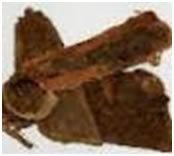 மாந்த்ரீக மகத்துவம் கொண்ட பீ நாறி மூலிகை