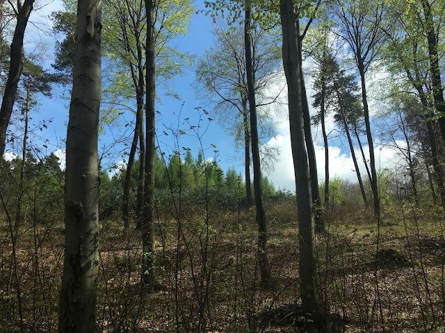Wiosenny spacer po lesie - Poszukując raju