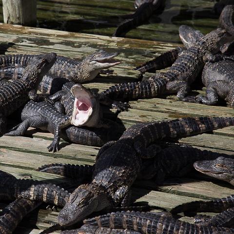 Florida lasten kanssa