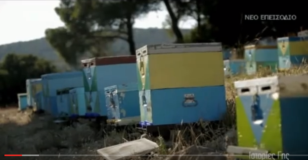 Εκπομπή για την Μελισσοκομία στην τηλεόραση του ΣΚΑΙ video
