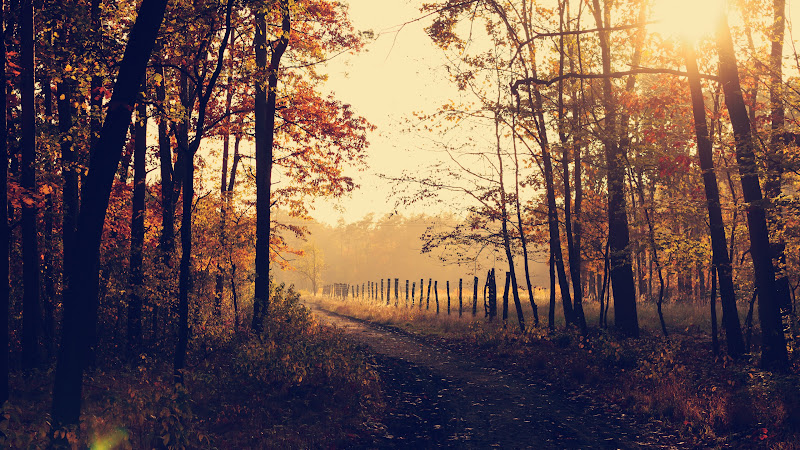 Through Forest Path admiring the Fall Leaves HD