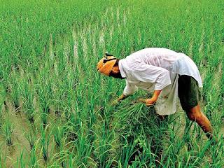 Mukhya Mantri Kisan Sahay Yojana--Gujarat