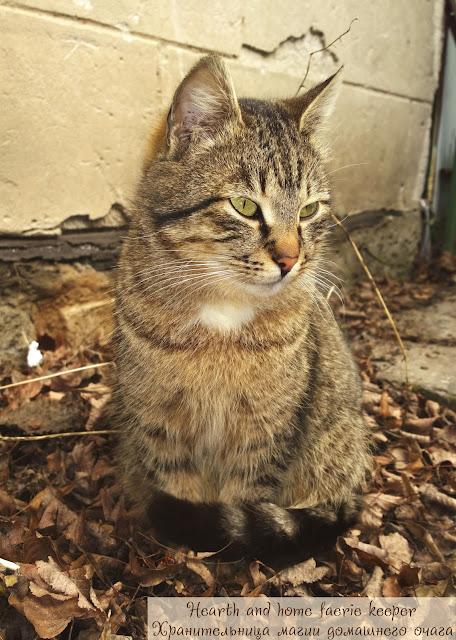 Серый полосатый кот радуется весне