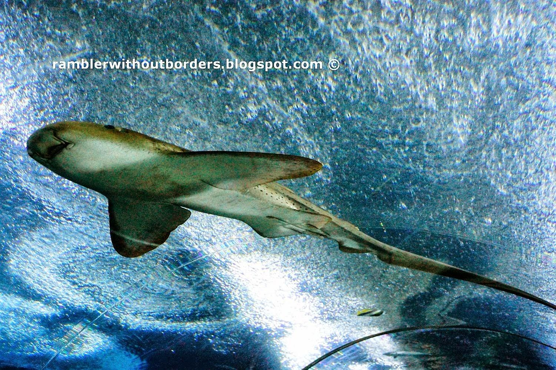 shark, Underwater World, Sentosa, Singapore