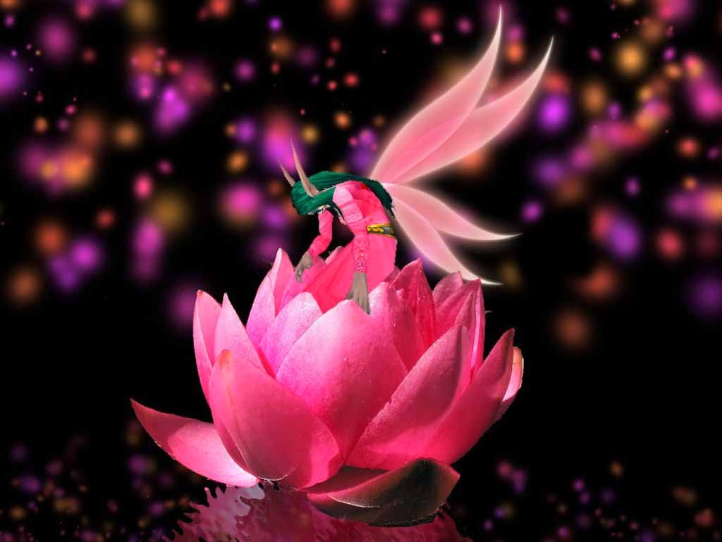 Lovely HQ Wallpapers: Fantasy Flower Wallpapers