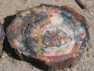 madeira petrificada com xilopala