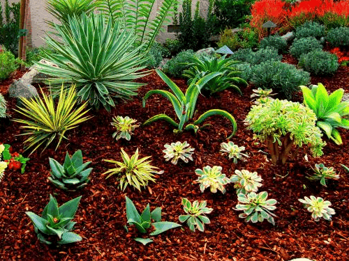 Where the heck is marinduque replacing my grass lawn - Drought tolerant plants landscape design ...