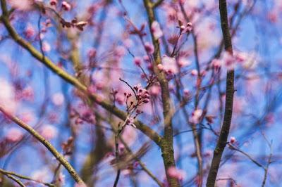 Afrontar la astenia primaveral con una correcta alimentación