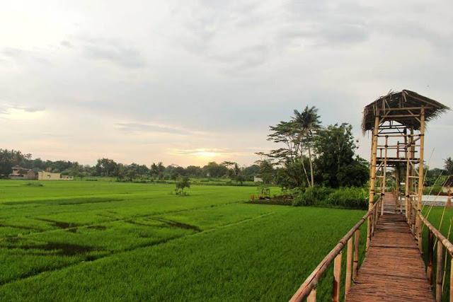 Wisata sawah kreasi di Yogyakarta dengan nuansa alam