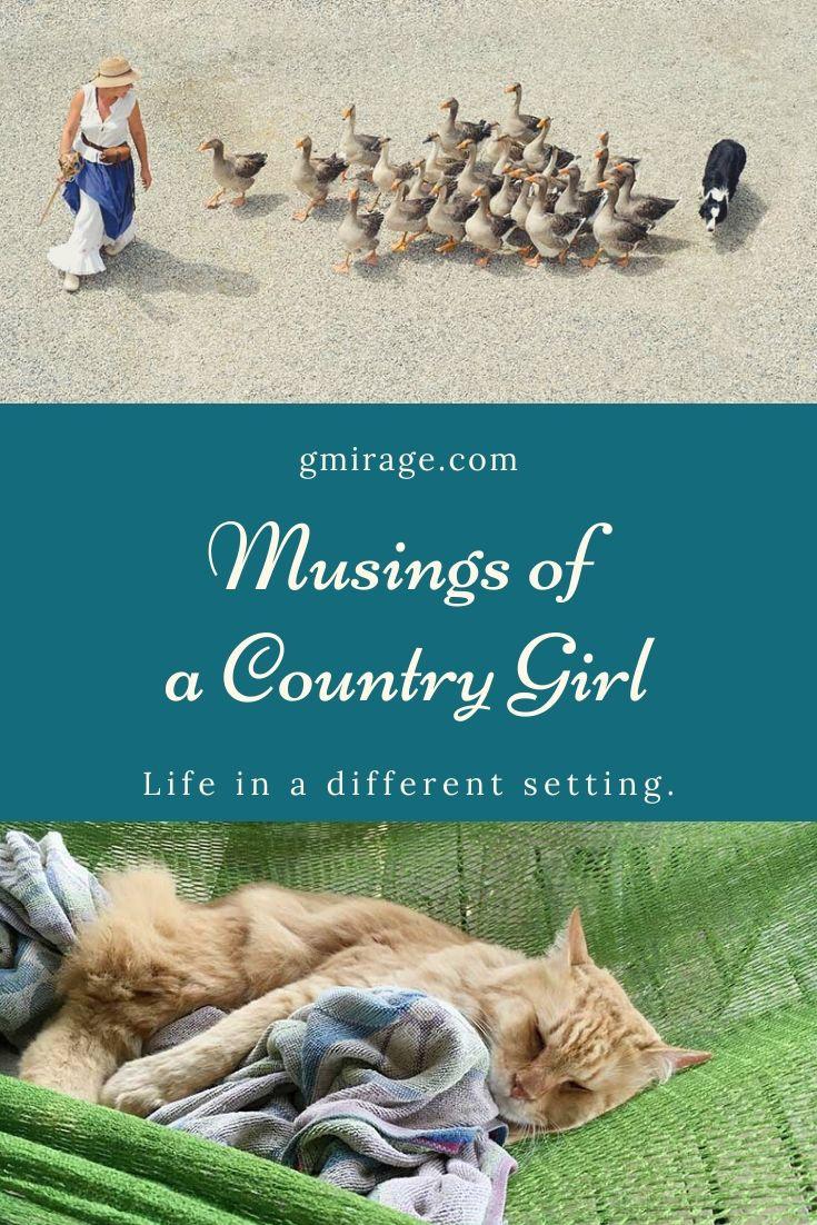 Musings of a Country Girl, farmgirl, cat farm