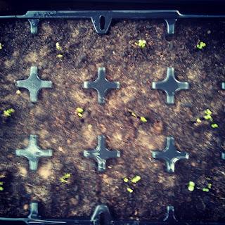 growing, gardening