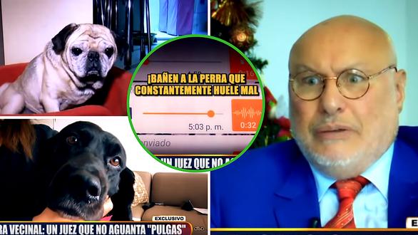 """Surco: Juez denunció a perritos por """"ladrar mucho"""" y ganó las demandas  Vídeo"""