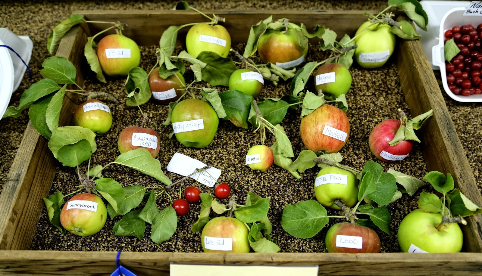 Different varieties of Alaskan apples