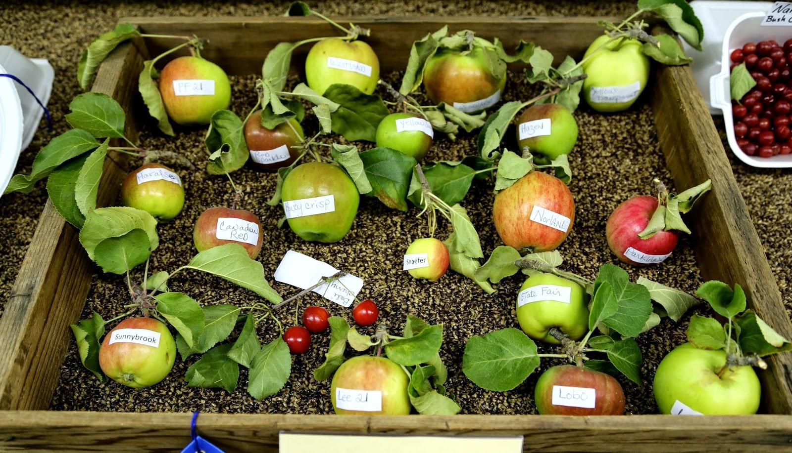 Different varieties of Alaskan apples