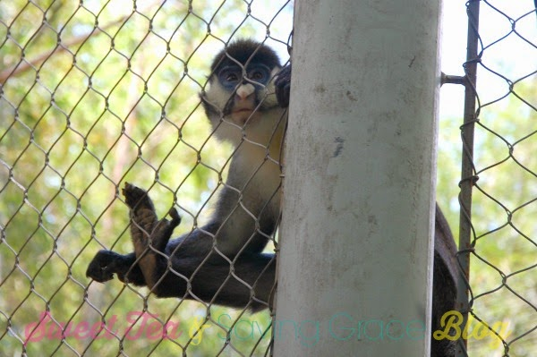 Zoo Atlanta - www.sweetteaandsavinggraceblog.com