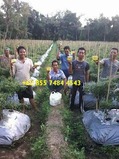 AGEN NASA DI Kecamatan Sematang Borang - TELF 082186630120