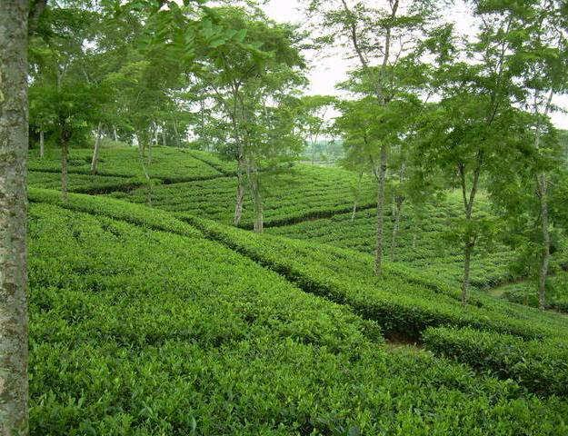 List of Synonyms and Antonyms of the Word: natural beauty of bangladesh
