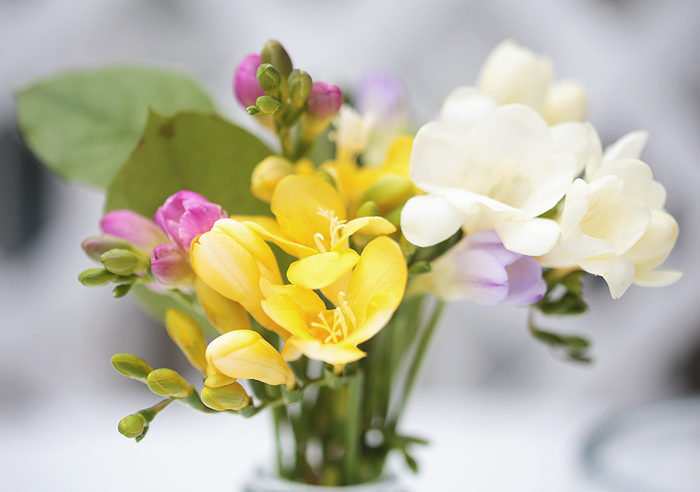 Blumen Fresien Vegetarisch Grillen