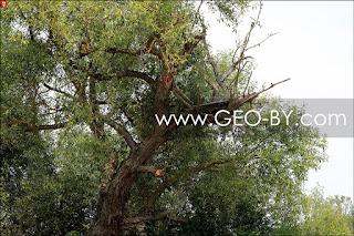 Засидка на дереве