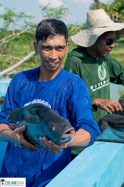 tilapia farms in the philippines