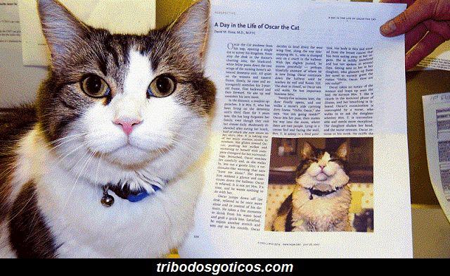gato lindo coleira bem cuidado historia