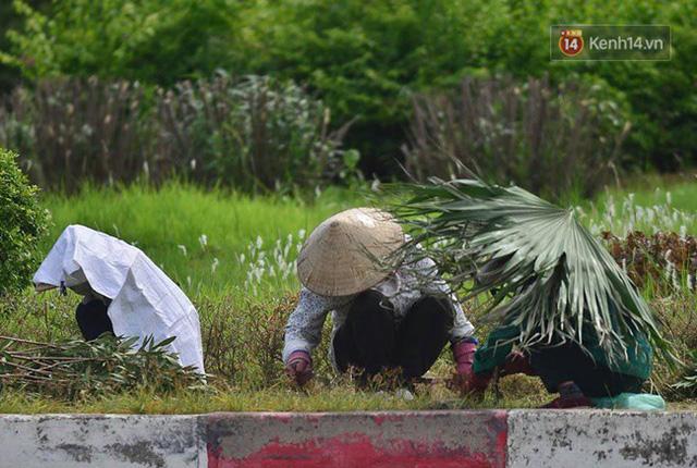 Công nhân dùng lá cây che nắng