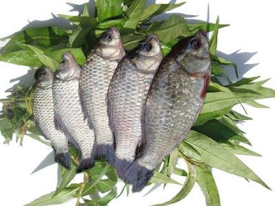 Nấu món canh cá diếc với rau răm bổ đủ thứ