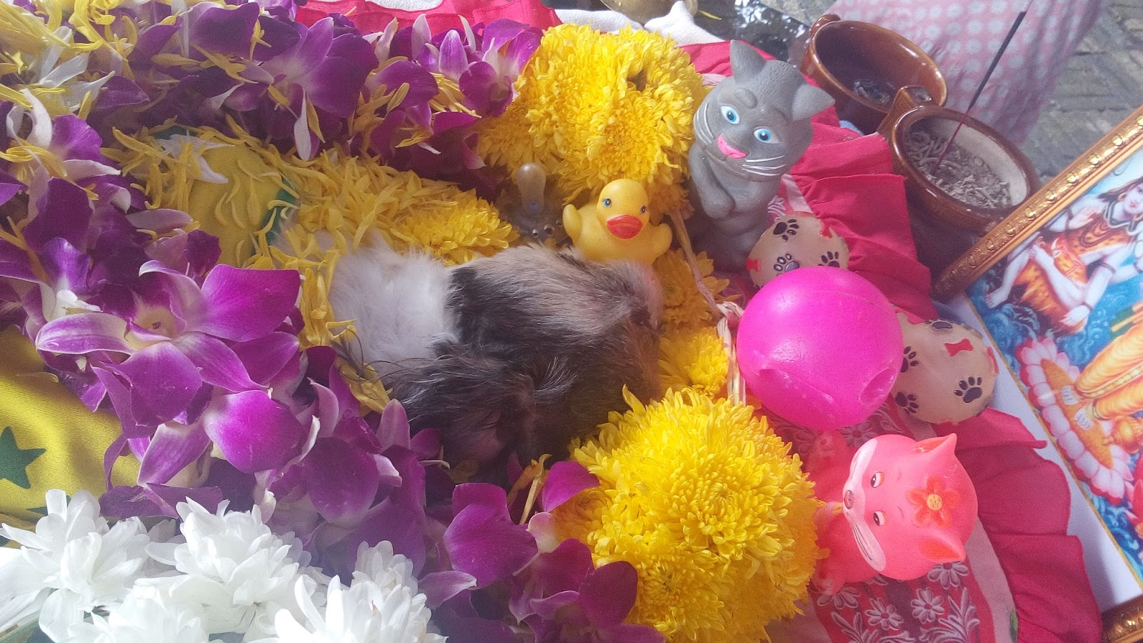 Puppy pet dog funeral cremation hindu way malaysia pets in peace puppy pet dog funeral cremation hindu way malaysia izmirmasajfo