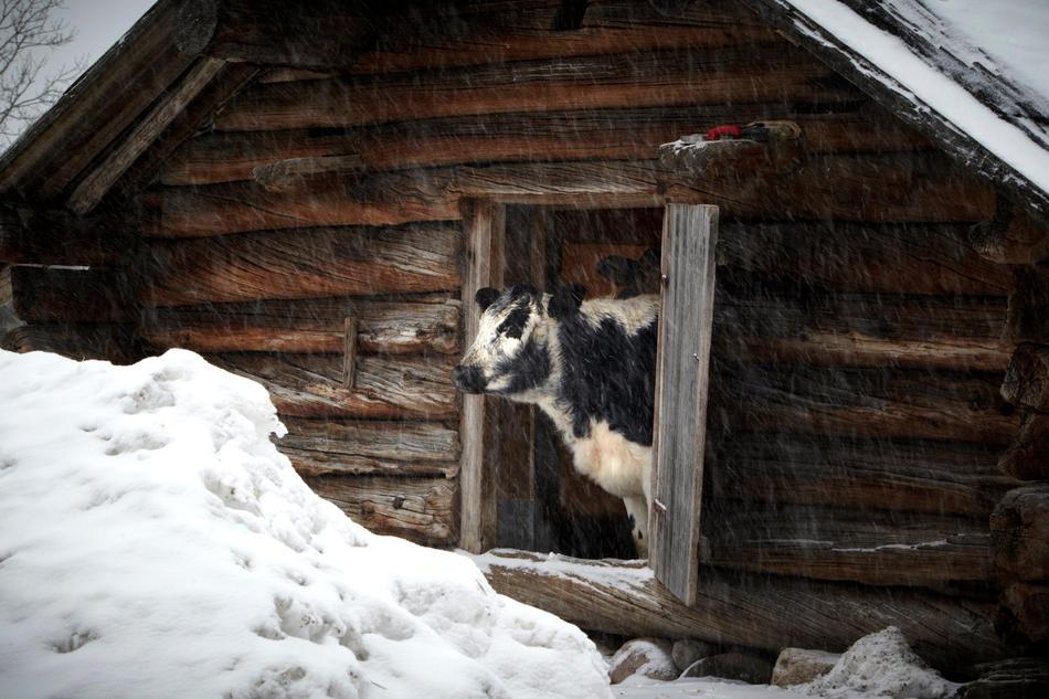 Картинки домашние животные зимой
