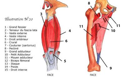 un médecin du sport vous informe: Claquages des muscles des faces ...