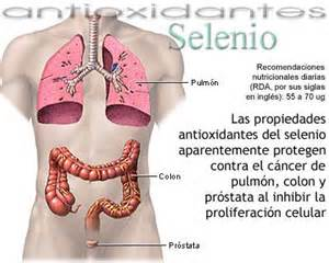 función de la prostata wikipedia