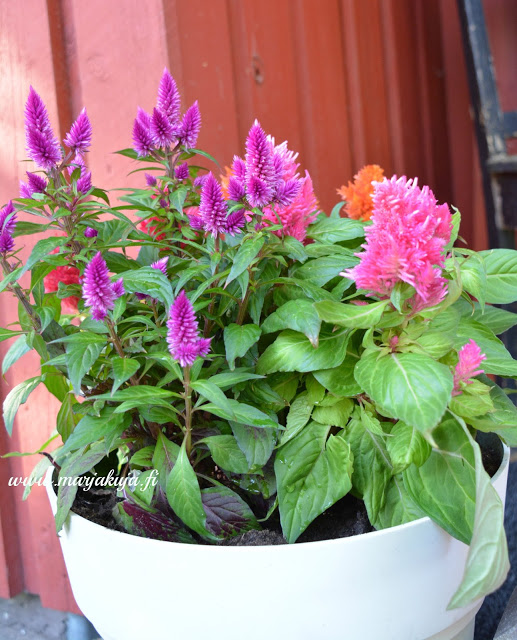 Kukonharja Kukka