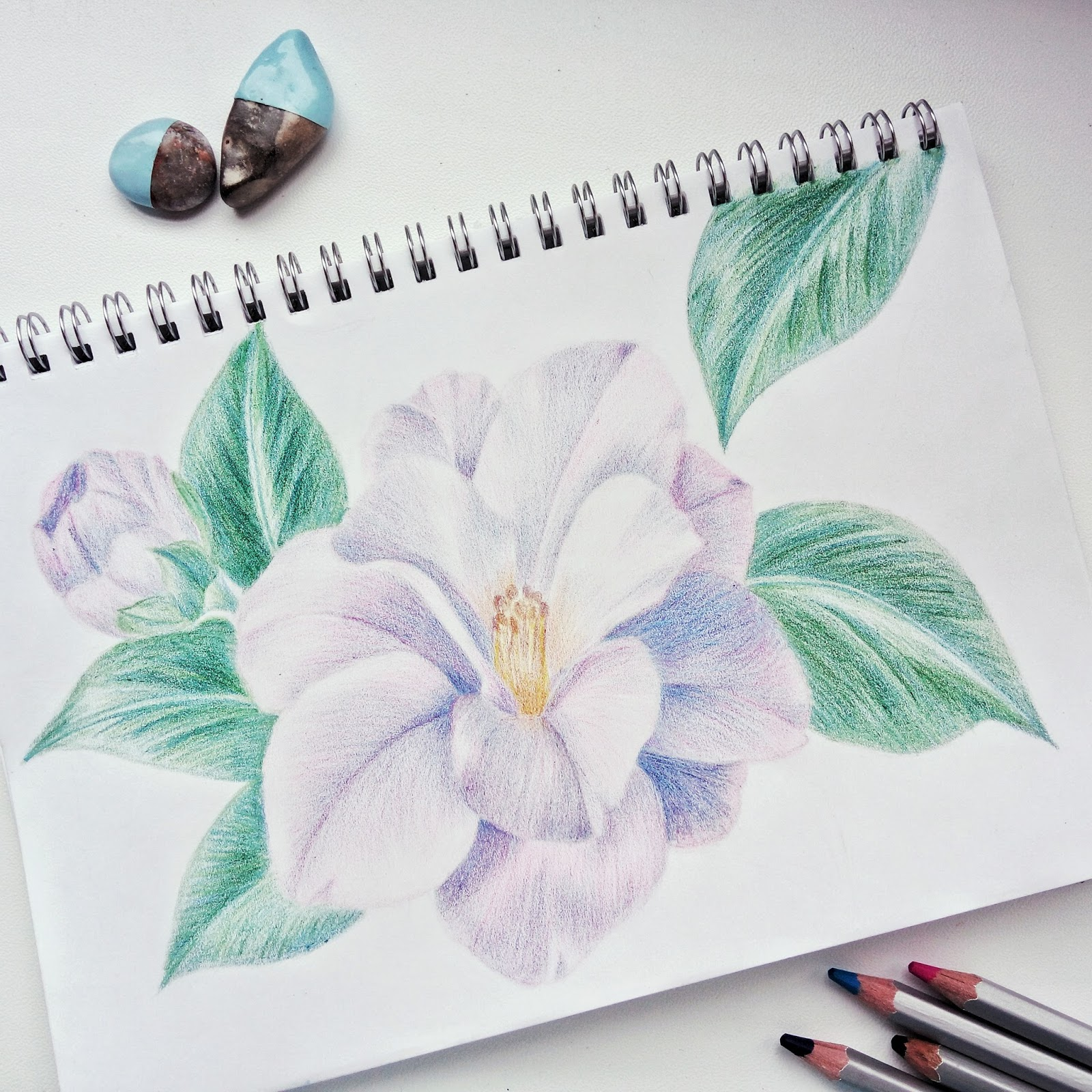 Drawing of nice and soft camellia flower by Natalia Kolodiazha
