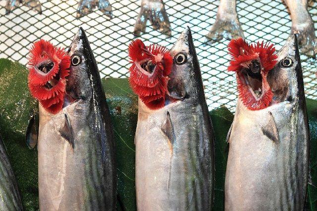 Bagian dari Ikan yang Bermanfaat