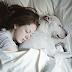 Mira que puede pasarte si duermes con tu mascota. Tú decides si continúas haciéndolo