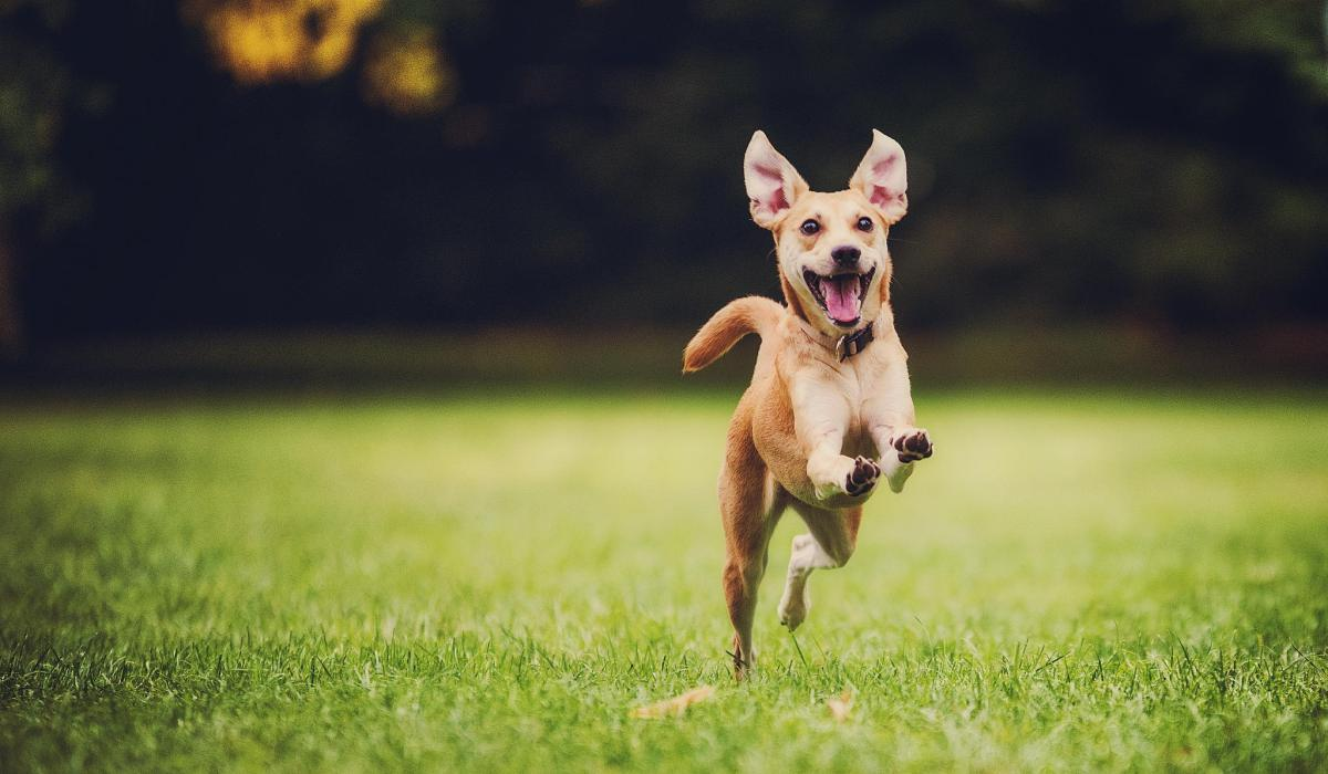 Image result for dog run