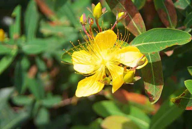 flowers, gardens, Okinawa