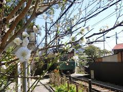 御霊神社の白桃