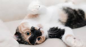 gatos com lesões em fisioterapia